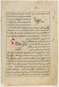 view Folio from <em>Aja'ib al-makhluqat</em> (Wonders of Creation) by al-Qazvini; recto: Bat (Kuffash); verso: Francolin (Daraj), Rooster (Dik) digital asset number 1