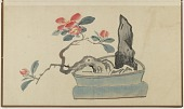 view Camellia and rock in a planter, from an album of flower and rock arrangements in pots digital asset number 1