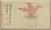 view Red bamboo, from an album of flower and rock arrangements in pots digital asset number 1