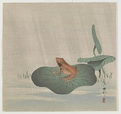 view Frog on lotus leaf digital asset number 1