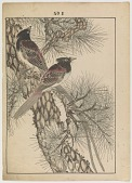 """view Jay Birds On Pine/ Page From """"Keinen Gafu"""" digital asset number 1"""