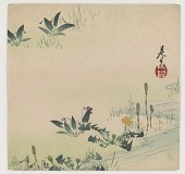 view Tsukushi (horsetail), violet and dandelions growing by a stream digital asset number 1