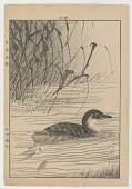 """view Grebe/ Page From """"Keinen Gafu"""" digital asset number 1"""
