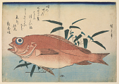 view Red rockfish (<i>Akodai</i>) with Bamboograss, with inscription digital asset number 1