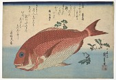 view Red Sea bream, from the <i>Great Fish Series</i>: Madai (Pagrus major) digital asset number 1