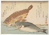 view Kasago (Sebasticus marmoratus) Marbled Rockfish and Himedai (Pristipomoides sieboldii) digital asset number 1