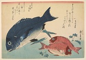 view Woodblock print from the <i>Large Fish Series</i>: Kurodai: Black seabream (Acanthopagrus schlegeli) and Akadai: Red seabream or golden tai digital asset number 1