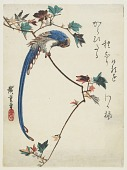 view Blue magpie on maple branch digital asset number 1