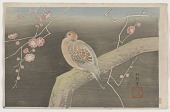 view Dove on cherry plum branch digital asset number 1