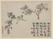 view Album of Flowers and Portrait of Shitao: Flowering Crab Apple digital asset number 1