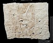 view Naqsh-i Rustam (Iran): Squeeze of Inscription, DNb, Akkadian Version, on the Tomb of Darius I digital asset number 1