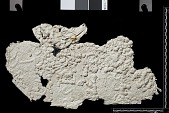 view The Sassanian Inscription of Paikuli (Iraq): Squeeze (unpublished), Unidentified Version digital asset number 1