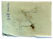view Excavation of Samarra (Iraq): Squeeze of the Greek Inscriptional Form of the Letter 'Z' digital asset number 1