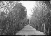 view Tree-Lined Avenue Leading to a Gate and Garden digital asset: Tree-Lined Avenue Leading to a Gate and Garden [graphic]