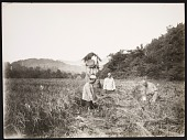 view Workers Harvesting Rice [graphic] digital asset number 1