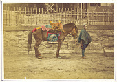view [Pack horse and driver], ca. 1875. [graphic] digital asset number 1