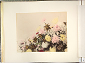 view [Flowers], [1860 - ca. 1900]. [graphic] digital asset number 1