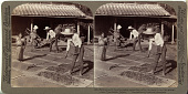 view (9) Farmers with bamboo rakes spreading millet on mats to dry for winter - near Yokohama, Japan, 1904 or earlier. [graphic] digital asset number 1