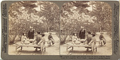 view (59) A family of middle-class picnicing [sic] under the the cherry blossoms, Omuro Gosho (E. to pagoda), Kyoto, Japan, 1904 or earlier [graphic] digital asset number 1