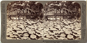 view (84) Sacred lotus flowers, emblematic of spiritual purity - in bridge-spanned pond north (north) Osaka, Japan, 1904 or earlier. [graphic] digital asset number 1