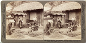 view (92) Thrifty farmers' wives heading barley by pulling it through iron combs near Iwakuni, Japan, 1904 or earlier. [graphic] digital asset number 1