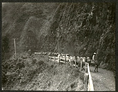 view Hawaii: mule train along a mountain road. 1905 digital asset number 1