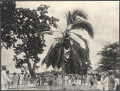 view Filipinos gathered under palm tree, watching man cutting coconuts in treetop, probably Tacloban digital asset: Filipinos gathered under palm tree, watching man cutting coconuts in treetop, probably Tacloban