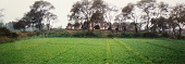 view Garden around the Kabuli Bagh Mosque, Panipat, India 1978 digital asset number 1