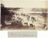 view Elephant Train Photograph, late 19th century digital asset number 1