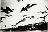 view Gulls, from <em>Kyoku/Erotica</em> series digital asset number 1