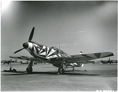 view North American P-51A Mustang; Paints and Decals, Camouflage, Aircraft, Confusion Camouflage. [photograph] digital asset number 1