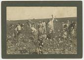 view <I>No. 86, Picking Cotton</I> digital asset number 1