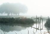view Photograph of a foot bridge at Myrtle Grove Plantation digital asset number 1