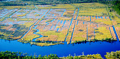 view Aerial photograph of rice fields adjacent St. Marys River digital asset number 1