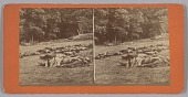 view Stereograph of deceased soldiers on the battlefield after Gettysburg digital asset number 1