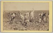 view <I>No. 19, Cotton Picking</I> digital asset number 1