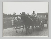 view Portrait of an anonymous man on a mule drawn cart at 6 a.m. digital asset number 1