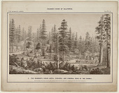 view The Mammoth Grove. Plate IX. The Mammoth Grove Hotel, Grounds, and General View of the Forest. digital asset: The Mammoth Grove. Plate IX. The Mammoth Grove Hotel, Grounds, and General View of the Forest