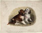 view Puppies digital asset: Puppies