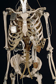 view YORICK, The Bionic Skeleton digital asset number 1