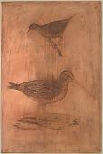 "view Engraved printing plate ""Scolopax meridionalis, Zaporina umbrina"" digital asset number 1"