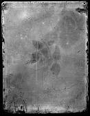 view Photographic History Collection: Levi Hill digital asset: Hillotype color daguerreotype