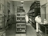 view [Rows of stacked guinea pig pens and two laboratory workers: b & w photoprint.] digital asset: [Rows of stacked guinea pig pens and two laboratory workers: b & w photoprint.]