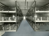 view [Rows of stacked Guinea pig pens: b & w photoprint.] digital asset: [Rows of stacked Guinea pig pens: b & w photoprint.]