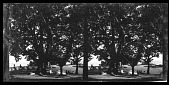 view [Groups under trees on lawn and sundeck.] photonegative digital asset: [Groups under trees on lawn and sundeck.] photonegative.