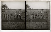 view Women laborers in a banana field, state plantation, Irebu Camp. [Active no. 9955 : stereo interpositive.] digital asset: Women laborers in a banana field, state plantation, Irebu Camp. [Active no. 9955 : stereo interpositive.]