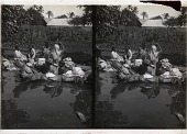 view A Colombian washing day--along the Magdalena river, near Baranquilla, S.A. 11517 interpositive digital asset: A Colombian washing day--along the Magdalena river, near Baranquilla, S.A. 11517 interpositive 1906.