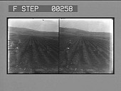 view [Overview of workers in a field. Stereo photonegative,] digital asset: [Overview of workers in a field. Stereo photonegative,] 1906.