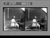 view [Young girl with pet sheep : stereo photonegative] digital asset: [Young girl with pet sheep : stereo photonegative], 1906.
