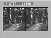 view [Walkway in forest near Niagara Falls : stereo photonegative.] digital asset: [Walkway in forest near Niagara Falls : stereo photonegative.]